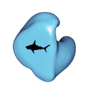 F6-SHARK